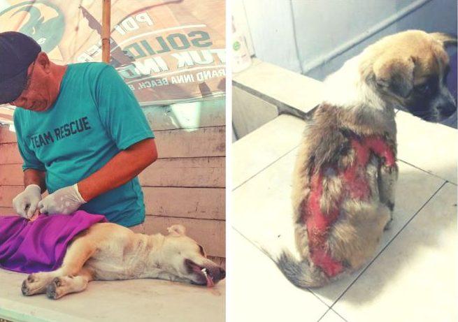 Foto van een straathond die wordt verzorgd