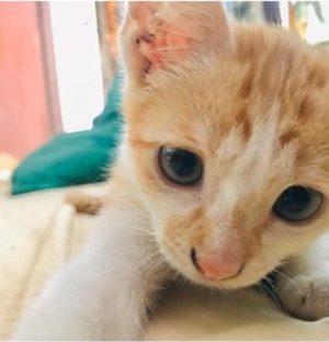 Street kitten Think Volunteer