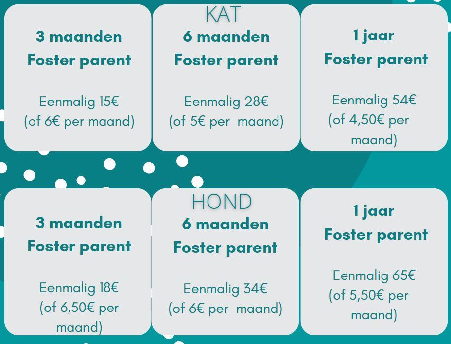 Foto van pleegprijzen voor zowel katten als honden. Voor katten kost 3 maanden pleegouderschap een eenmalige vergoeding van 15 euro of 6 euro per maand. Voor 6 maanden kost het 28 euro eenmalig of 5 euro per maand, en als laatste voor 1 jaar kost het 54 euro of 4 euro en 50 cent per maand. Voor honden kost een pleegouder van 3 maanden eenmalig 18 euro, of 6 euro en 50 cent per maand. Voor 6 maanden kost het 34 euro of 6 euro per maand. En als laatste kost het voor 1 jaar 65 euro eenmalig of 5 euro en 50 cent per maand.